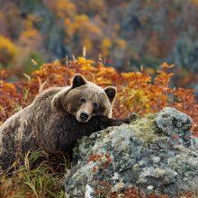 Красивые картинки со Всемирным днем дикой природы 2019 (16 фото)