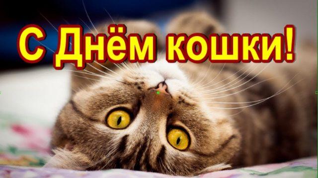 С днем кошек Maxresdefault-1-7-640x360