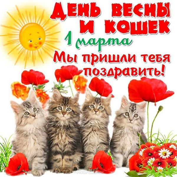С днем кошек красивые картинки