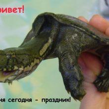 Красивые картинки с Всемирным днем черепахи (18 фото)