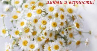Красивые картинки с Всероссийским днем семьи, любви и верности 2019 (25 фото)