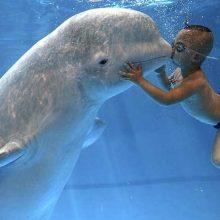 Красивые картинки с Всемирным днем китов и дельфинов 2019 (12 фото)