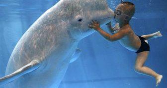 Красивые картинки с Всемирным днем китов и дельфинов 2020 (16 фото)