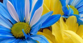 Красивые картинки с Днем Государственного флага Украины 2020 (15 фото)