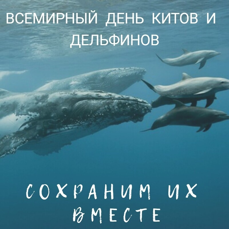 Поздравление с днем китов