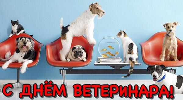 den-veterinarnogo-rabotnika-otkritki-s-pozdravleniyami foto 10