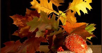 Красивые картинки с Первым днем осени 2019 (17 фото)