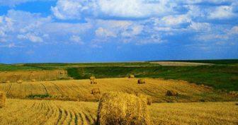 Красивые картинки с Днем работников сельского хозяйства Украины 2019 (11 фото)