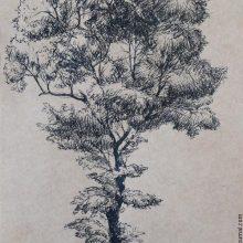 Рисунки черной ручкой для срисовки (30 фото)
