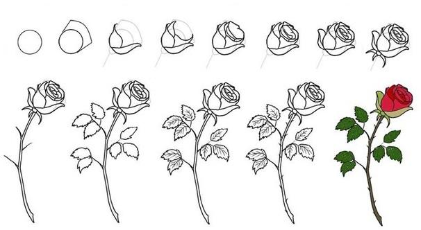 Как нарисовать розу картинки по этапу, картинки надписями сергею
