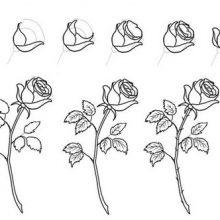 Рисунки для срисовки поэтапно (33 фото)