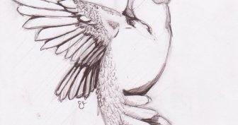Рисунки птиц для срисовки (22 фото)