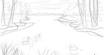 Рисунки природы карандашом для срисовки (28 фото)