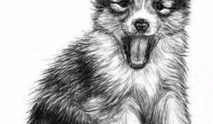 Рисунок собаки карандашом для срисовки (30 фото)