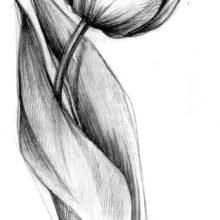 Классные рисунки карандашом для срисовки (23 фото)
