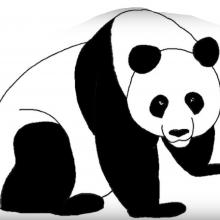 Картинки панды для срисовки (29 фото)