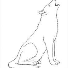 Картинки волка для срисовки (30 фото)