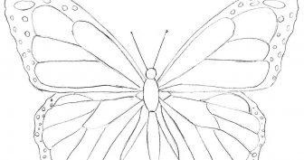 Картинки бабочек для срисовки карандашом (27 фото)