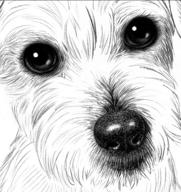 рисунки карандашом не сложные но красивые собаки так поставил вопрос