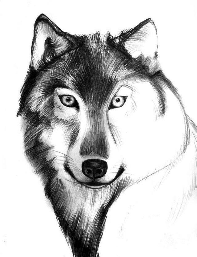 Картинки карандашом прикольные волка