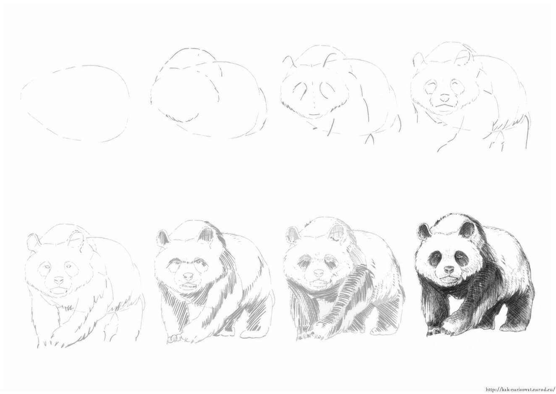 картинки для срисовывания пошагово витраж