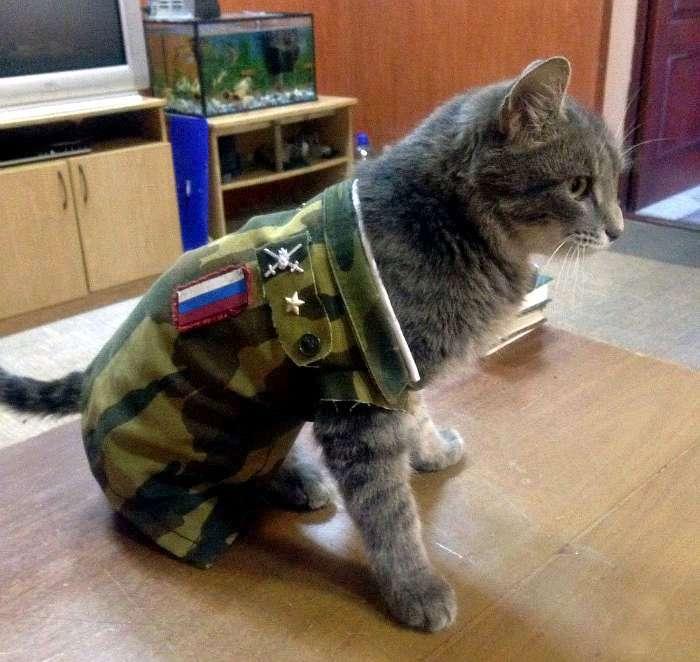 Коты в армии картинки