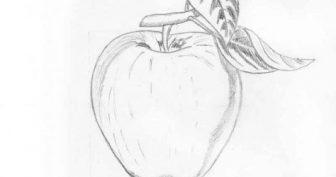Картинки для срисовки фрукты (25 фото)