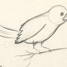 Картинки птиц для срисовки карандашом (17 фото)