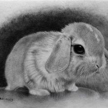 Картинки кроликов для срисовки (25 фото)