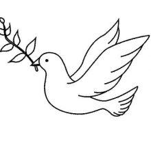 Рисунки для срисовки голуби (16 фото)