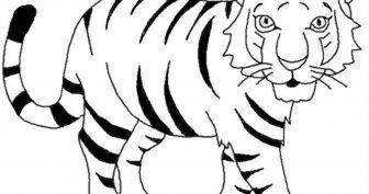 Картинки тигра для срисовки (23 фото)