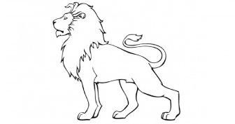 Рисунки льва для срисовки (18 фото)