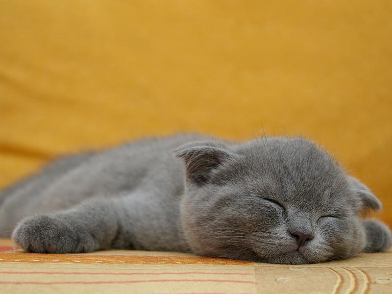 Котики смешные картинки с надписями хотят спать, картинка рождением