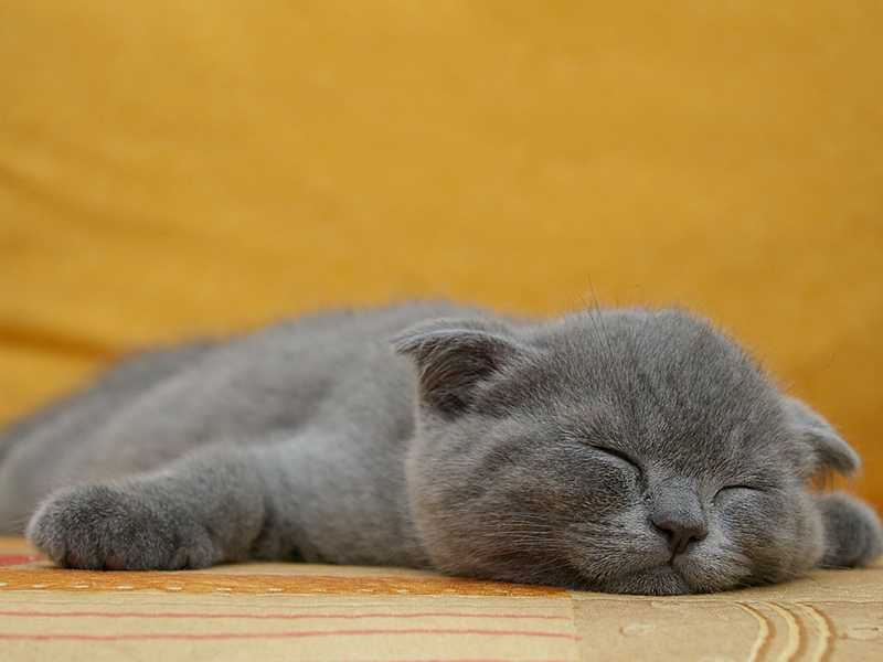 Как я сплю картинки прикол
