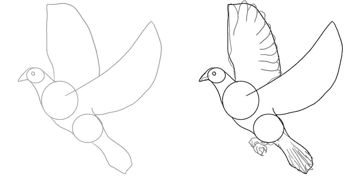 Картинки, голубь на открытку для срисовки