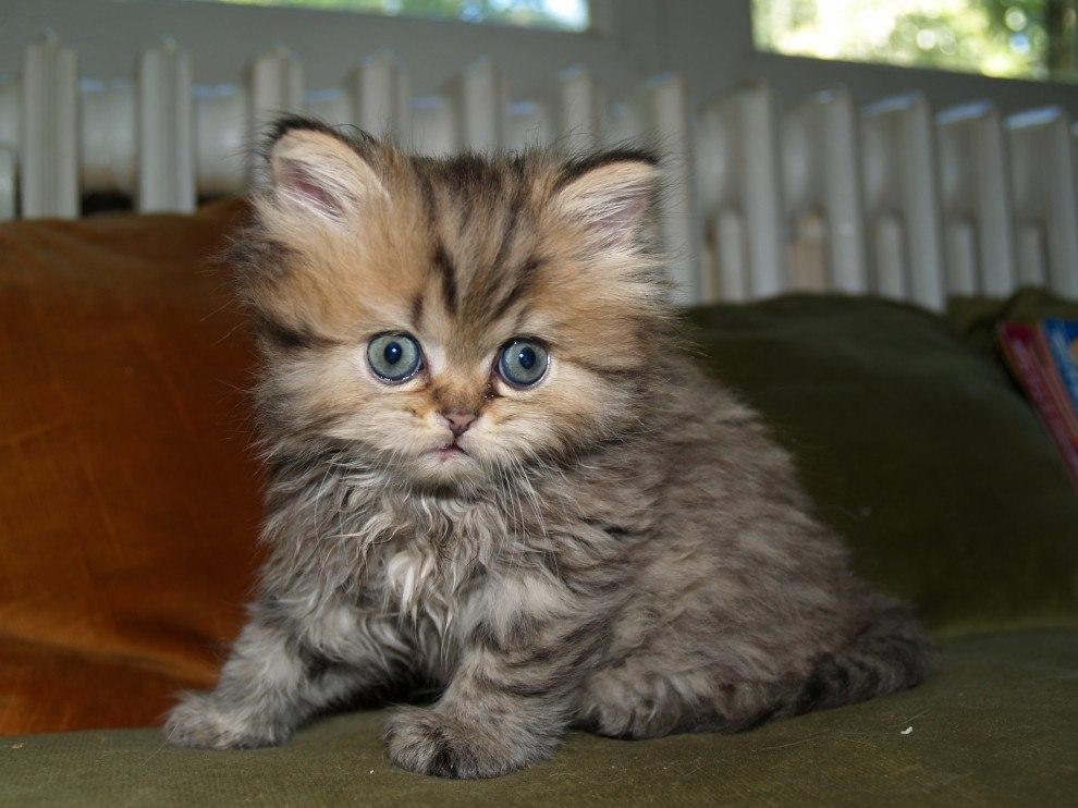 Про, картинки приколы про котят