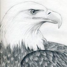Картинки орлов для срисовки (17 фото)