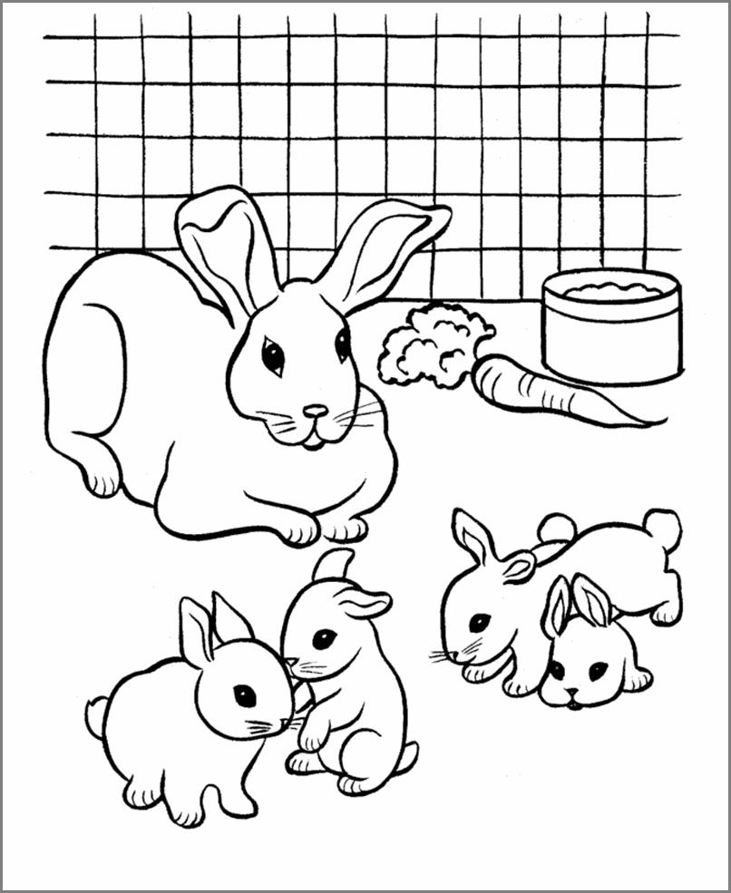 разукрашки с картинками кроликами