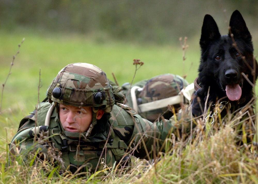 помню, картинки военные животные обработанный каталог
