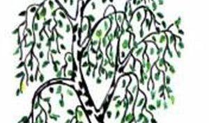 Рисунки деревьев для срисовки (17 фото)