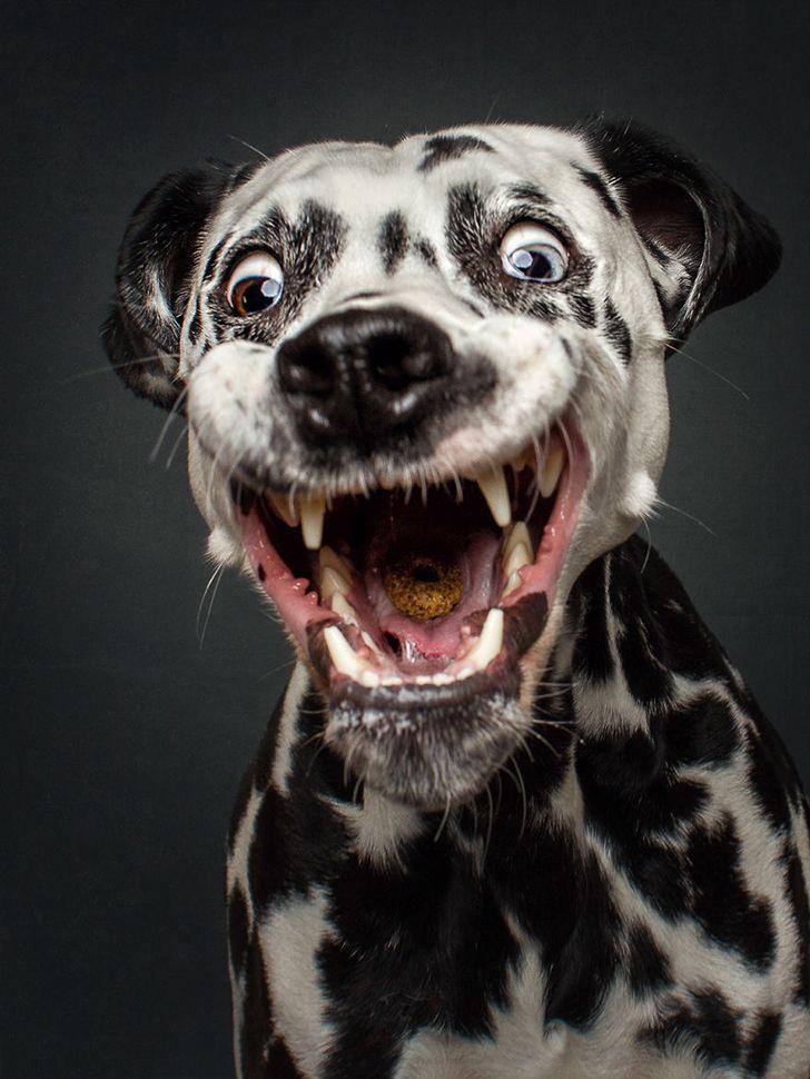 Классные собаки картинки