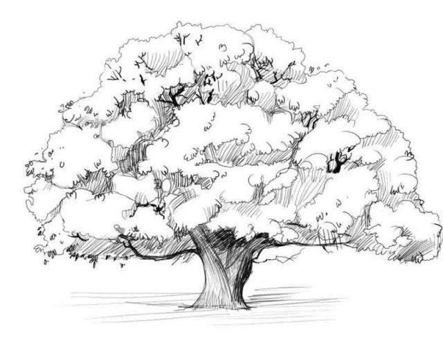 Рисунки деревьев для срисовки (17 фото) 🔥 Прикольные ...