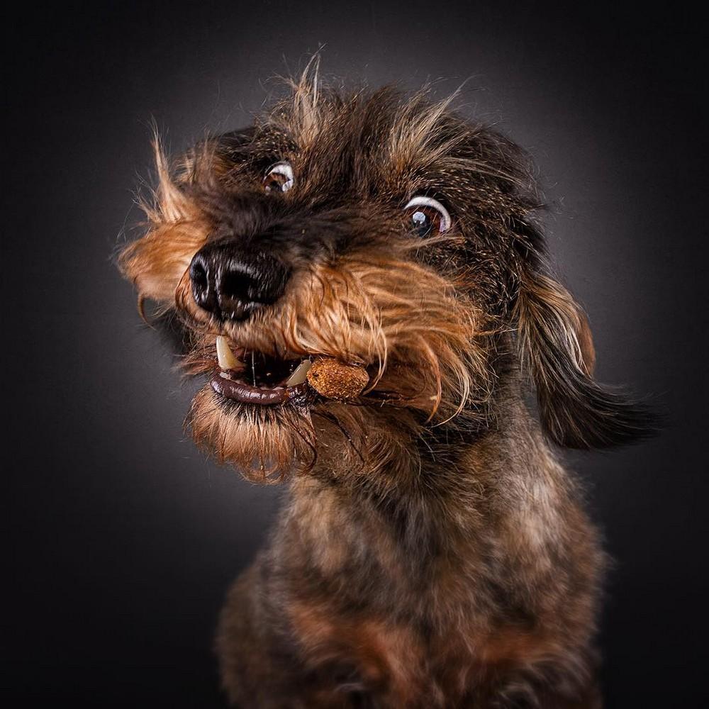 Картинки анимации, собаки смешные картинки фото