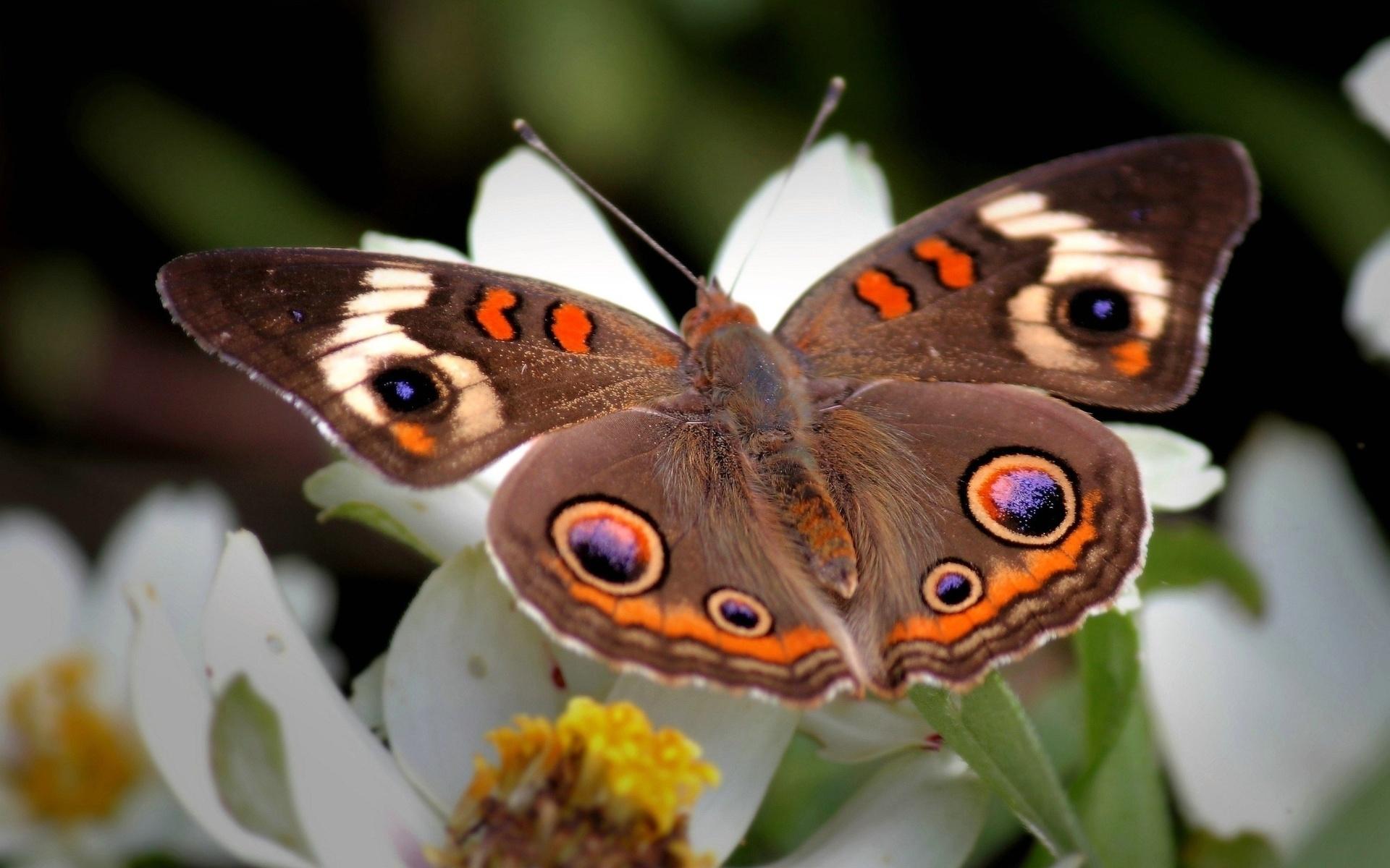 Бабочки клевые картинки