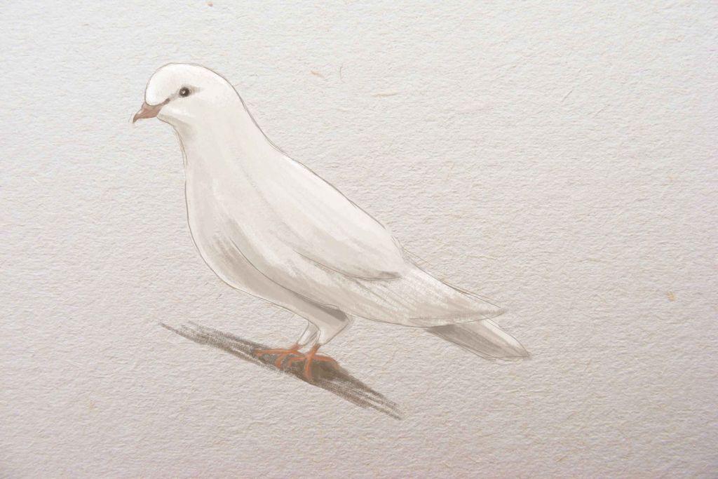 Картинки белых голубей рисунки