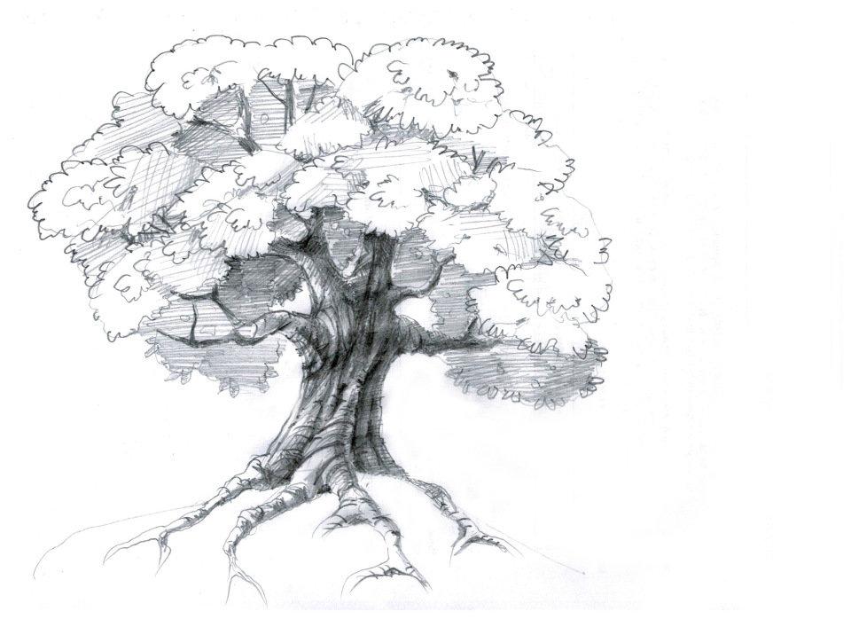оговориться картинки как рисовать дуб этим значение рисунков