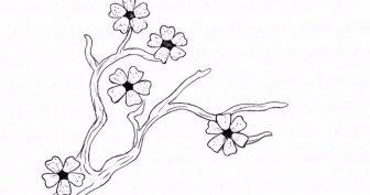 Рисунки сакуры для срисовки карандашом (19 фото)