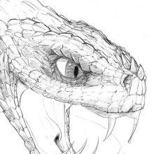 Картинки змей для срисовки (31 фото)