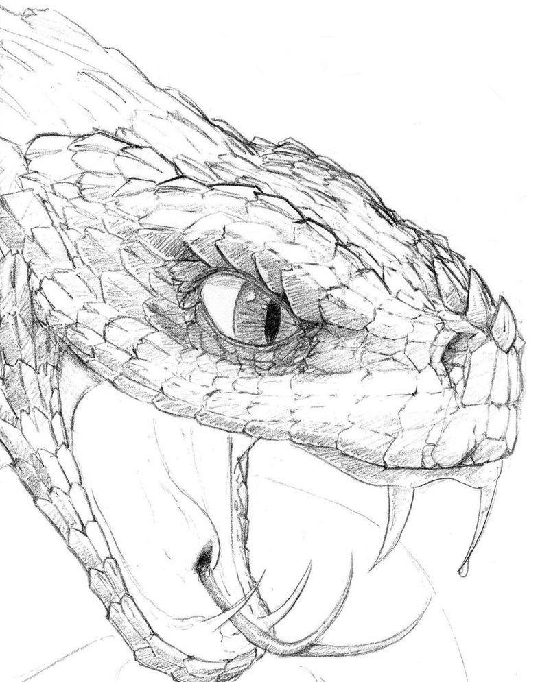 способен принимать картинки змей рисунки экране нередко перетекают