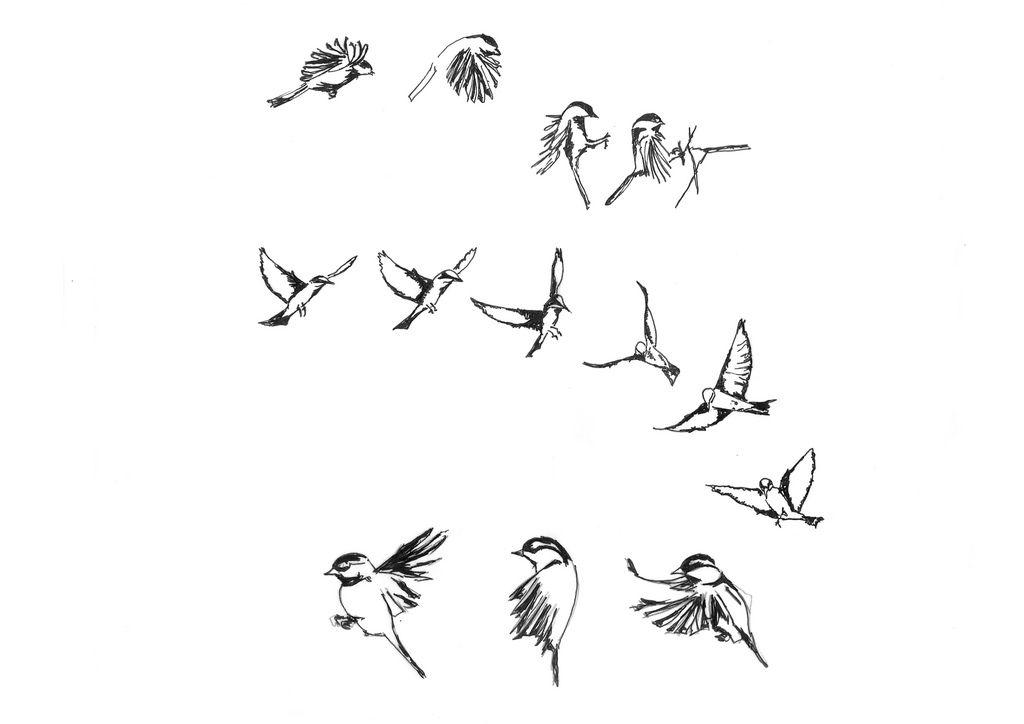 пейзажи картинки летящей птички карандашом шкаф можно